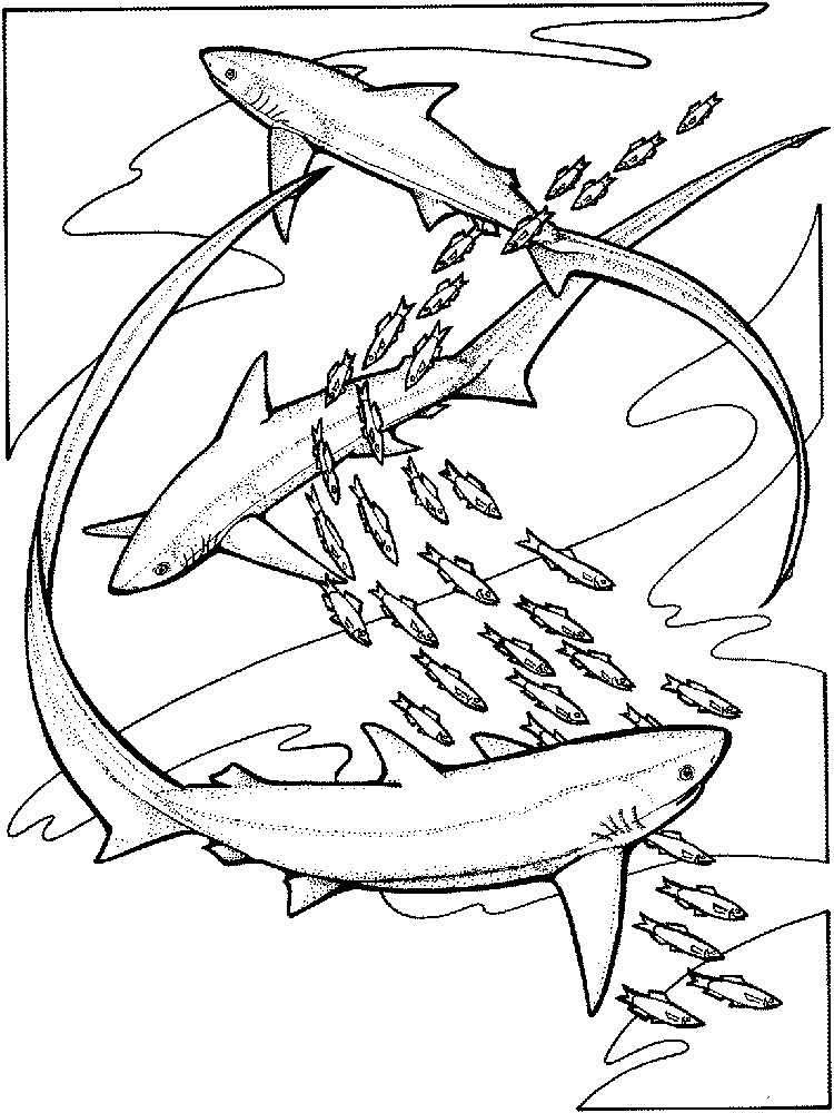 Раскраски Акула. Скачать и распечатать раскраски Акула.