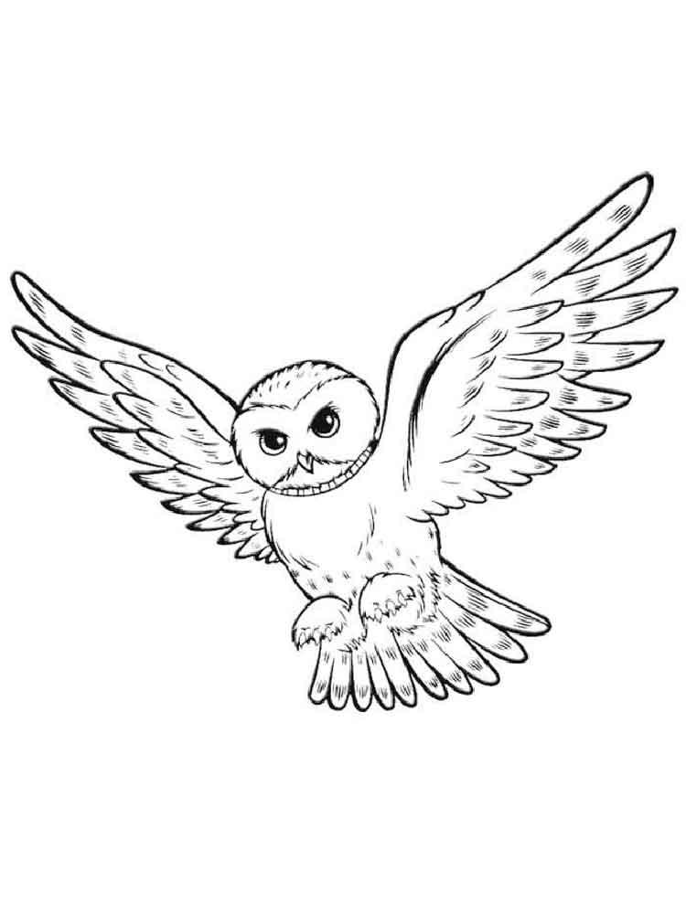 Раскраска полярные совы в
