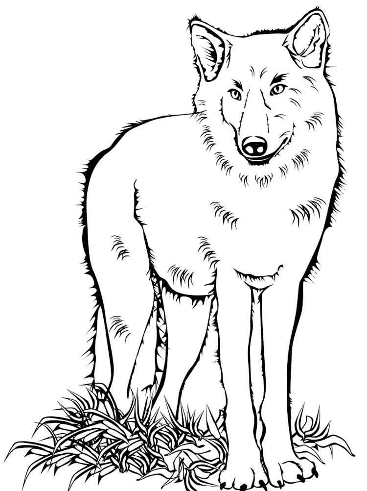 Волки картинка раскраска 47
