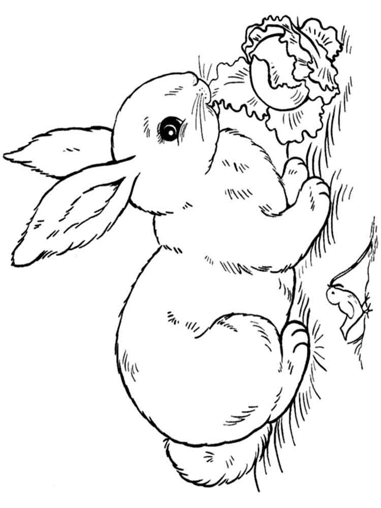 Bunny rabbit coloring pages