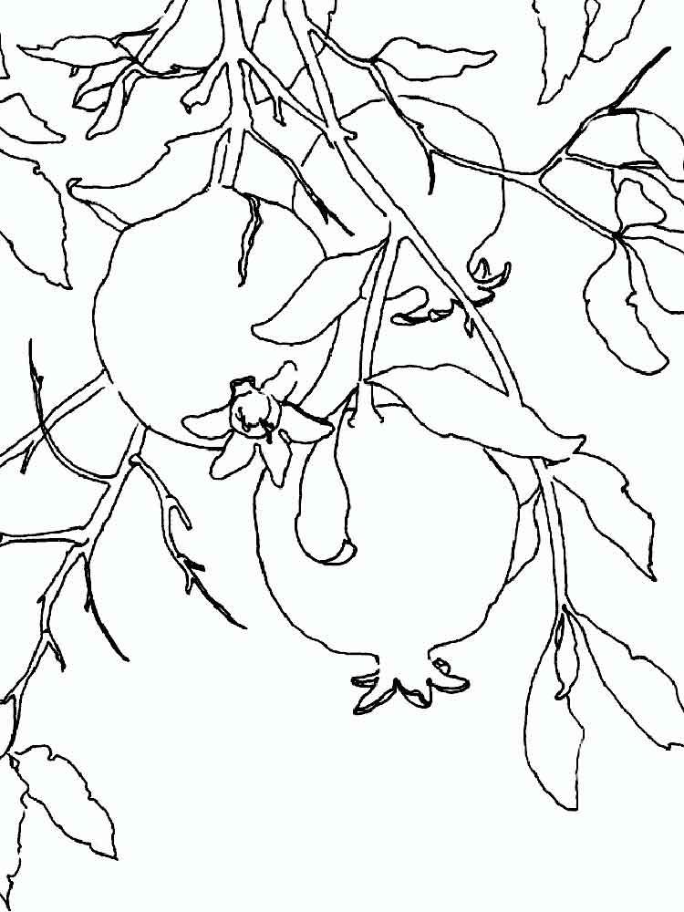 Yoshiko Yamamoto Block Print Pomegranates Not Dated S Izobrazheniyami Illyustracii Akvarelnye Pejzazhi Kartiny