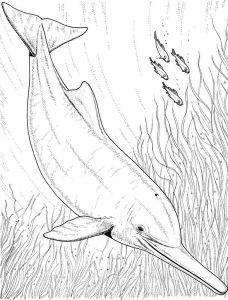 raskraska-delfin-10