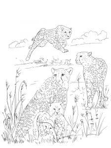 raskraska-gepard-1