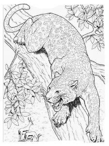 raskraska-gepard-10