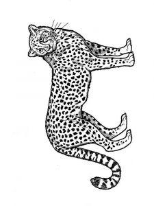 raskraska-gepard-4
