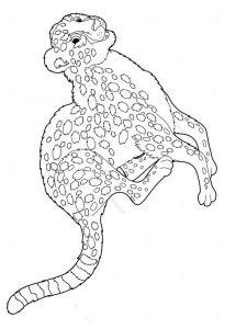 raskraska-gepard-5