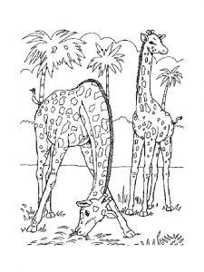 raskraska-giraffe-14
