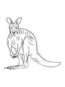 raskraska-kenguru-22