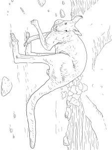 raskraska-kenguru-7