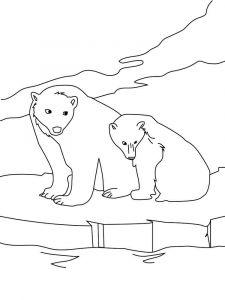 raskraska-medved-13