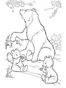 raskraska-medved-14