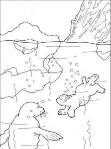 raskraska-medved-18