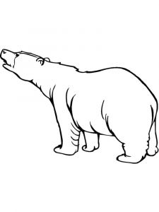 raskraska-medved-7