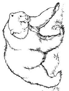 raskraska-medved-8