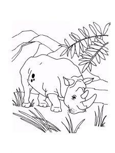 raskraska-nosorog-1
