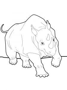 raskraska-nosorog-11