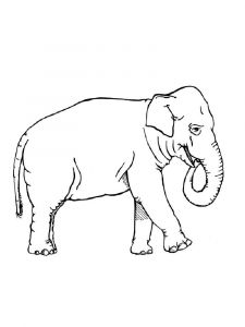 raskraska-slon-10