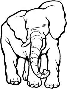raskraska-slon-16