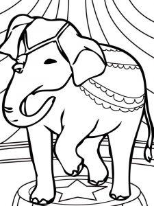 raskraska-slon-20
