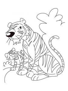 raskraska-tigr-12