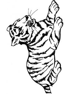 raskraska-tigr-14