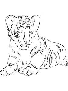 raskraska-tigr-18