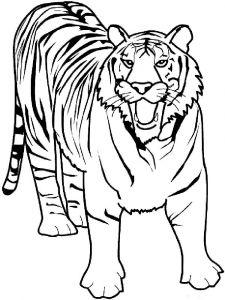 raskraska-tigr-3
