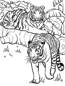 raskraska-tigr-9