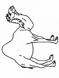 raskraska-verblud-10