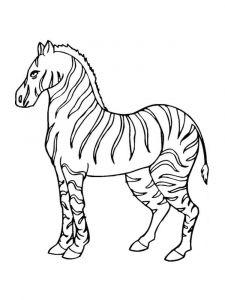 raskraska-zebra-13