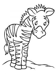 raskraska-zebra-6