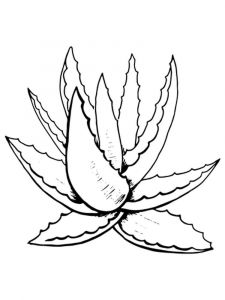raskraski-cvety-aloe-1