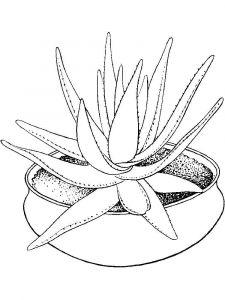 raskraski-cvety-aloe-6