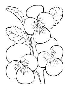 raskraski-cvety-fialka-1