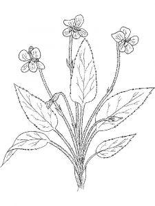 raskraski-cvety-fialka-10
