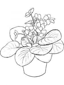 raskraski-cvety-fialka-11