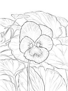 raskraski-cvety-fialka-2