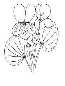 raskraski-cvety-fialka-6