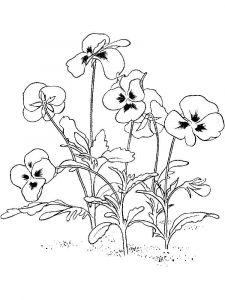 raskraski-cvety-fialka-9