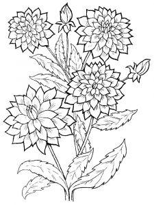 raskraski-cvety-georgin-1