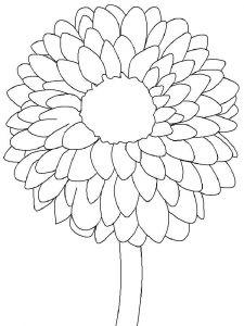 raskraski-cvety-georgin-4