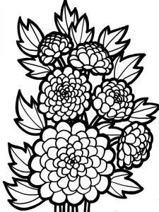 raskraski-cvety-georgin-7