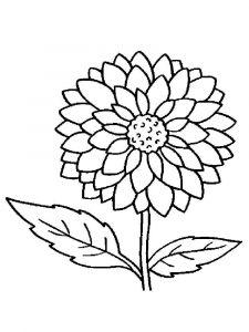 raskraski-cvety-georgin-9