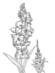 raskraski-cvety-gladiolus-6