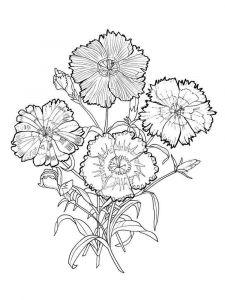 raskraski-cvety-gvozdika-1