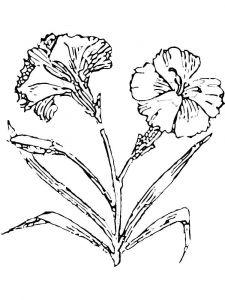 raskraski-cvety-gvozdika-12