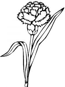 raskraski-cvety-gvozdika-2