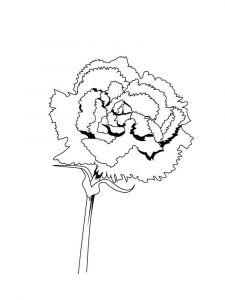 raskraski-cvety-gvozdika-4