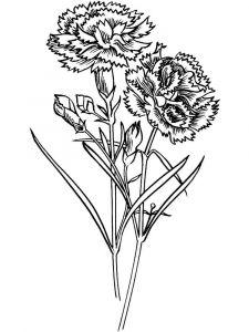 raskraski-cvety-gvozdika-6