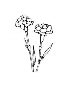 raskraski-cvety-gvozdika-7